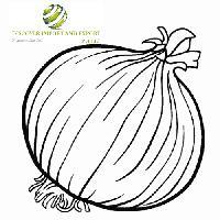 onion exporter