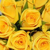 Gold Strike Rose Flower