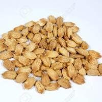 Bitter Gourd Seeds