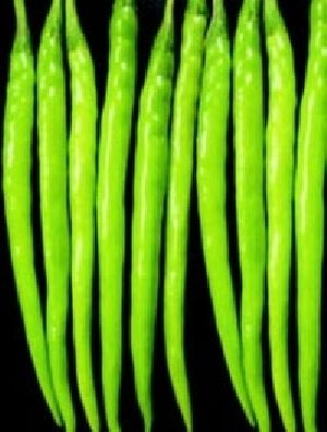 Hybrid Chilli Trishul
