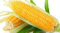 Export Quality 'a' Grade Yellow Maize