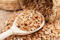 Export Quality Grade 'a' Wheat