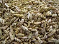 High Quality Fennel Seeds.