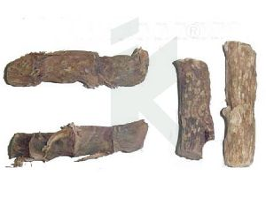 ACORUS CALAMUS (sweet flag root)