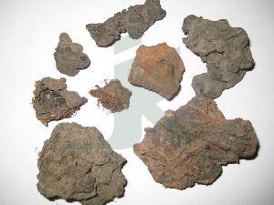 Bombax Ceiba (silk Cotton Tree Root)