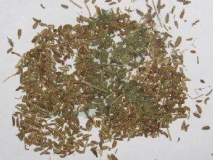 Daucus Carota (carrot Seeds)