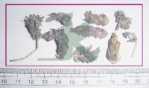 Lavandula Stoechas (lavender Flowers)