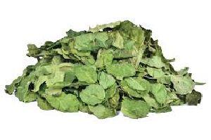 Moringa Oleifera (Moringa Leaves)
