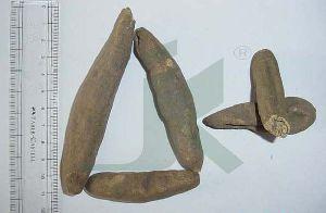 PAEONIA EMODI (peony roots)