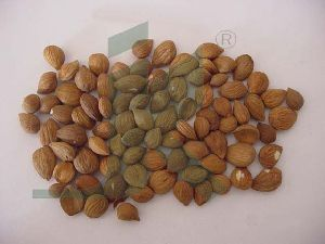 Prunus Armeniaca (apricot Seeds)