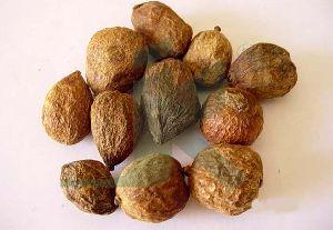 RANDIA DUMETORUM (Emetic Nut)