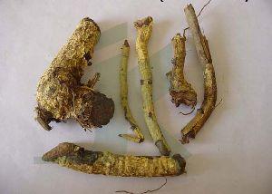 SALACIA RETICULATA (salacia root)