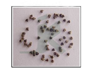 SIDA CARDIFOLIA EXTRACT (Country Mallow extract)