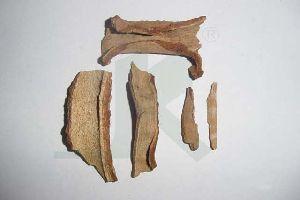 SYMPLOCUS RACEMOSA (Lodhra Tree)