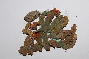 TURMERIC (mother rhizome)