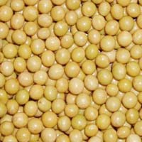Organic Soybean Oil Seeds