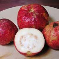 Fresh Chittidar Guava