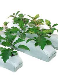 Coir Pith Grow Bags