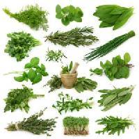 Indian Herbs