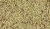Sorghum Millet Seeds