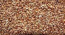 Varagu Millet Seeds