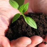 Organic Farming Services