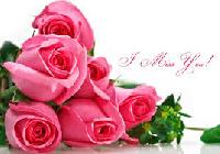 Noblesse Pink Roses