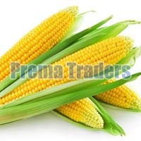 Yellow Whole Maize