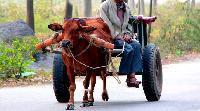 Animal Driven Vehicles