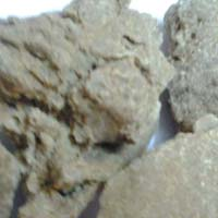 Best Quality Moringa Seed Oil Cake Exporters