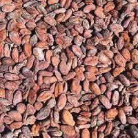 Cocodyma Seeds