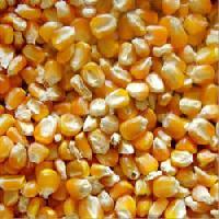 Yellow Maize Animal Feed