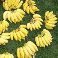 Elakki Banana
