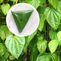 Sanchi Betel Leaves