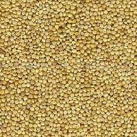 Spiked Millet