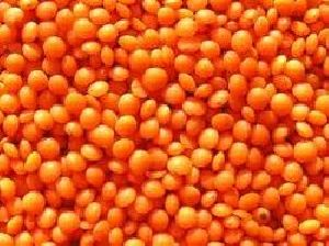 Football Lentils (red Football Lentils/ Red Lentils Whole /..