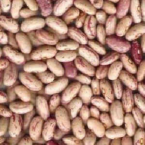 Kidney Beans Chitra (Kidney beans light / Chitra rajma)