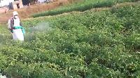 Neem Pesticides