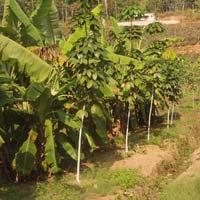 Agri India Fiber Product