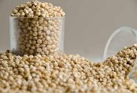 White Sorghum Seeds