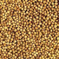 Coriander Seeds (dhaniyaa)