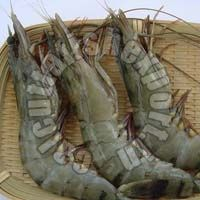 Black Tiger Shrimps