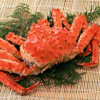 Live King Crab