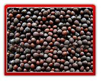 Mustard Seeds (yellow, Red & Black)