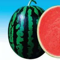 Dharma Awh-111 Hybrid Watermelon Seeds