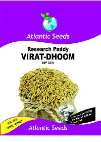 Virat-Dhoom Research Paddy Seeds