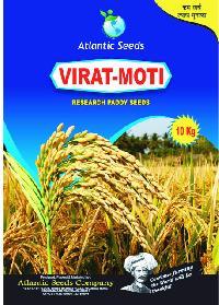 Virat-Moti Research Paddy Seeds