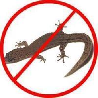 Lizard Control Services