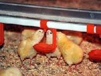 Poultry Drinking System