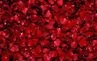 Freeze Dried Rose Petals